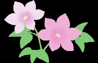 紫色のクレマチス