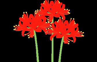 ヒガンバナ(彼岸花)