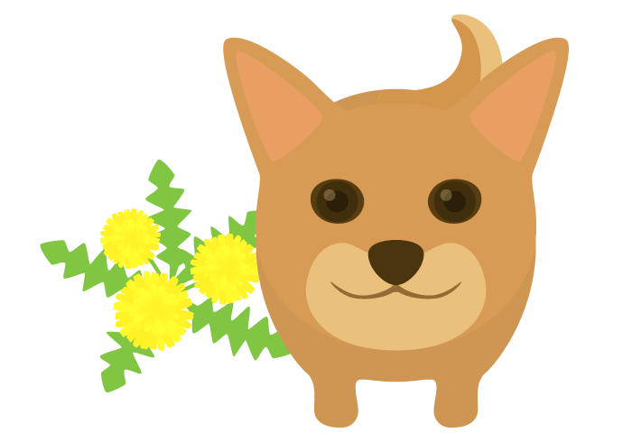 シバイヌ(柴犬)