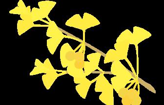 紅葉のイチョウ(銀杏)