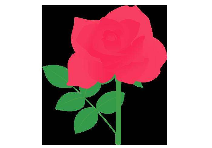 赤いバラ(薔薇)