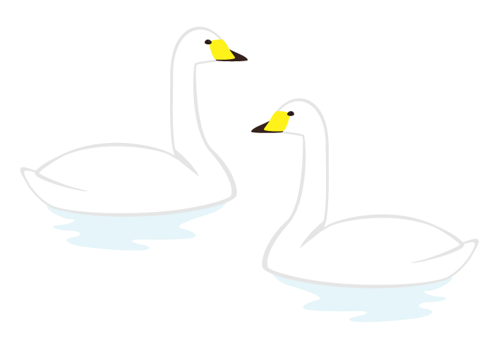 ハクチョウ(白鳥)