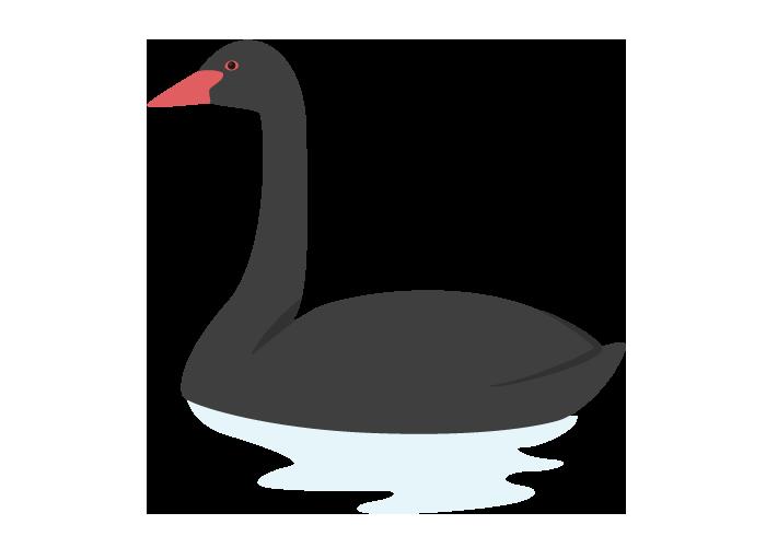 コクチョウ(黒鳥)