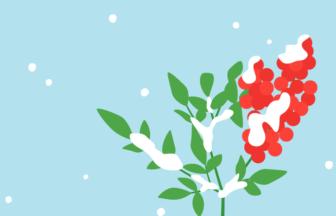 ナンテン(南天)と雪