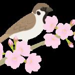 スズメ(雀)とサクラ(桜)