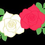 赤と白のバラ(薔薇)