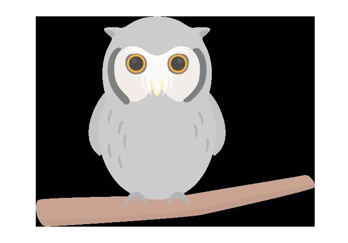 フクロウ(アフリカオオコノハズク)