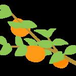 カキ(柿)