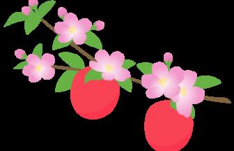 リンゴ(林檎)