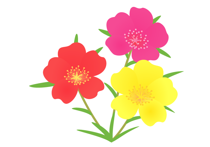 マツバボタン(松葉牡丹)