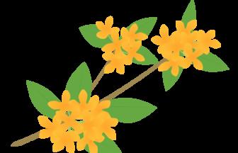 キンモクセイ(金木犀)