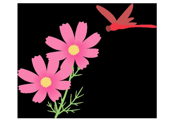 赤トンボとコスモス