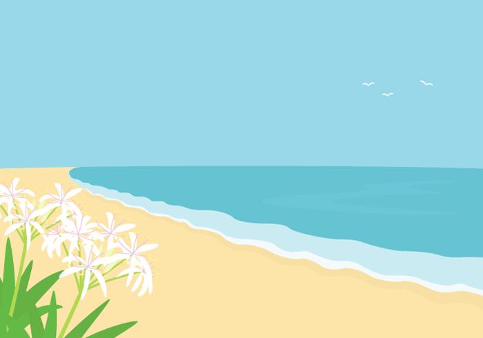 海岸(ハマユウ)