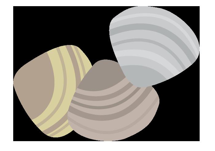 ハマグリ(蛤)