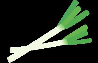 長ネギ(長葱)